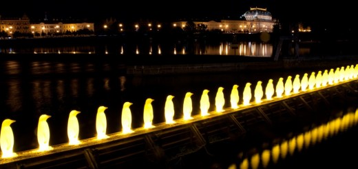 Penguins by Night